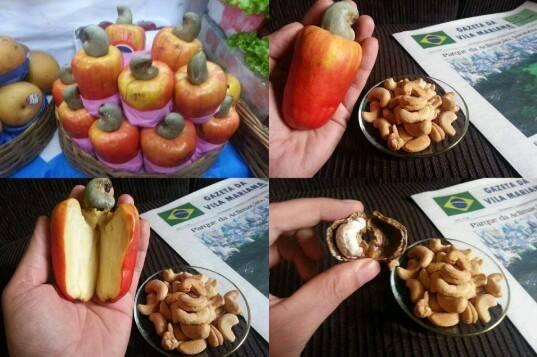 Kaju adıyla tanıdığımız çerez aslında bu meyvenin sapının içidir.