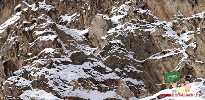 18--Kar-leoparı