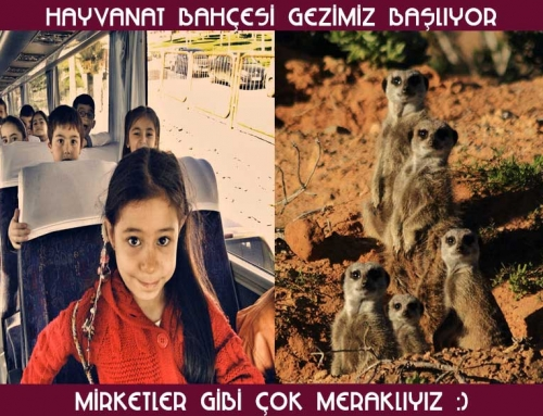 İzmir Doğal Yaşam Parkı Gezimiz