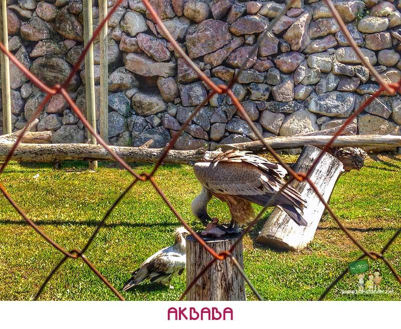 Sasalı-Akbaba