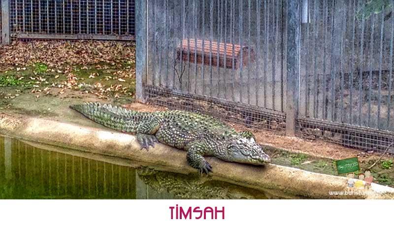 Sasalı-Timsah