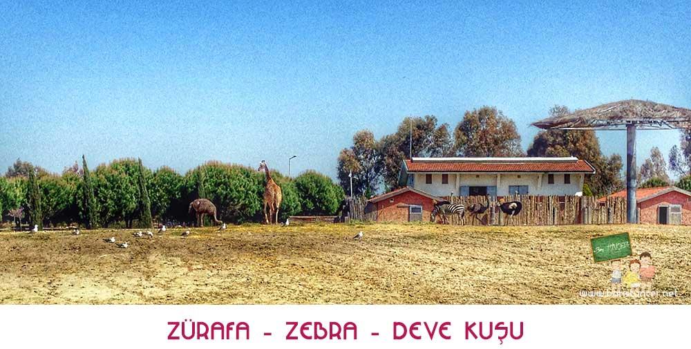 Sasalı-Zürafa-Zebra-Deve-Kuşu