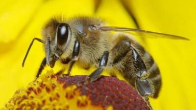 Matematik Dehası Arılar